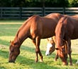 The Care and Feeding of Your Equestrian Web Site - The Top 10 Strategies for Getting Your Horse Biz Found Online