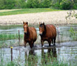 Replay! Live Webinar: Are You Prepared? - Disaster Preparedness for Horse Farms