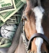 Webinar Replay: Smart Financial Planning for Horse Professionals