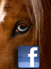 REPLAY! Members Group Coaching Session: Facebook Advertising for Horse Professionals