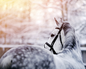 What Is In An Equine Lease Agreement
