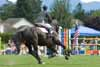 FREE EQUESTRIAN SPORTS PEFORMANCE ASSESSMENT!- For Hunter/Jumper, Dressage, Eventing, Reining, Cutting, Western Pleasure, Polo Players, Jockeys & Rodeo Riders etc.