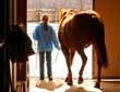 15 Ways to Improve Your Customers' Horse Buying Experience