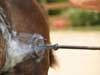 Avoid Burning Your Horse Business with Unintentional Branding