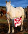 Horse Business Newsletter: Understanding Buyer Psychology Means More Horse Sales Success