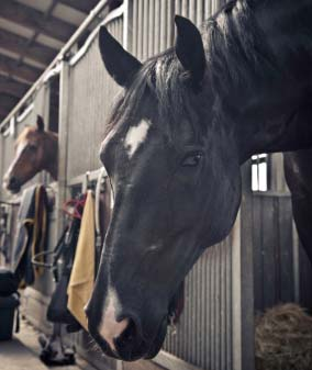 Does a Stable Own the Horse When Board is Past Due? Myths
