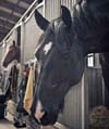 Does a Stable Own the Horse When Board is Past Due?  Myths and Misunderstandings Regarding Stables' Rights