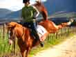 Questions for an Equine Law Practitioner - Avoiding Liability When Selling a Problem Horse