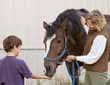 Questions for an Equine Law Practitioner    You Have a Corporation - Can You Be Personally Liable?