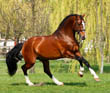 Make Your Sale Horse Shine! - First Impression Insights From a Potential Buyer