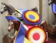 REPLAY VIDEO AVAILABLE NOW! Horse Show Season 2010 -  Professional Riders and Trainers Prepare for Excellence
