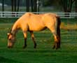 In Tough Financial Times --  Should You Start an Equine Retirement Stable?