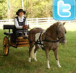 Audio: Interview with Ashlee Pigford - Twitter Tips for Riding Instructors and Horse Busineses
