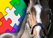 Equine Business Insurance - Putting Together the Protection Puzzle