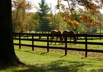 Fall Landscaping Tips landscaping tips for your farm