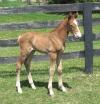 Equestrian Professional Member Spotlight - Linda Wanstreet of Lost World Farms and LWF Sport Horses