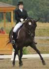 Equestrian Professional Member Spotlight - Maat van Uitert of Jotunheimens Staller