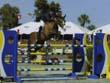 Equestrian Professional Member Spotlight - Darren Finkelman