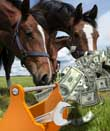 "Beware the ""FAKO"" Score When Finding the Right Horse Business Loan"