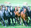 11 Free Ways to Market Your Horse Business