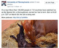 How Horse Professionals Can Use Images in Social Media Marketing