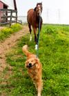 Retrieving Your Horse Business Motivation - Part 1