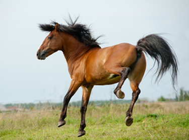 How to Stay Highly Motivated to Work on Your Horse Business