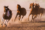FREE WEBINAR: Market Like a Pro How to Create The Ideal Marketing Mix for Your Horse Business