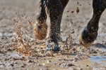 Hurry and Get Your Entry In!  We Are Ready to Help You Clean Up Your Horse Business Dirty Dozen