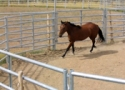 Rounding Up Information on Round Pens