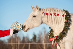 Last Minute Holiday Gifts for Equestrian Clients