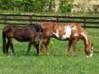 Equestrian Professional Member Spotlight - Weber's Retired Horses